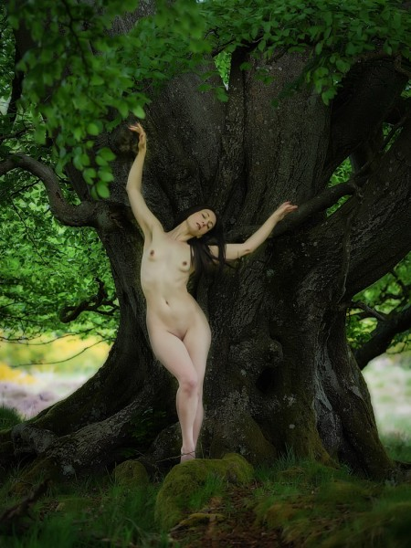 A Dryad Morning